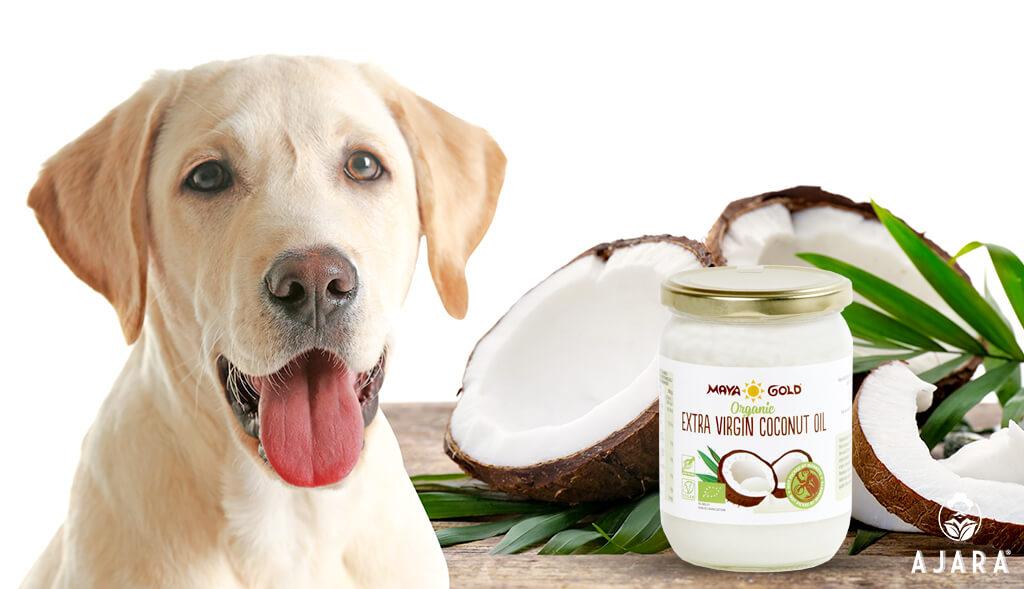 aceite de coco para animales