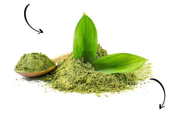Matcha Japanese green tea powder Uji Kyoto Japan